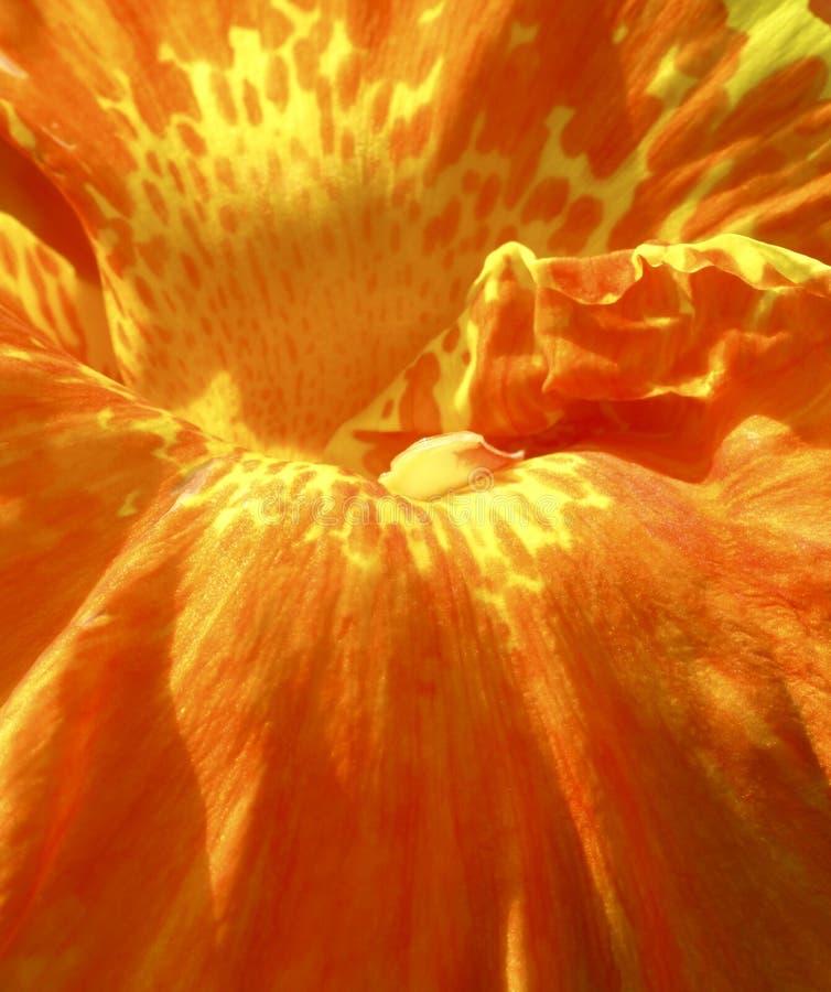 Close up de uma flor alaranjada imagens de stock