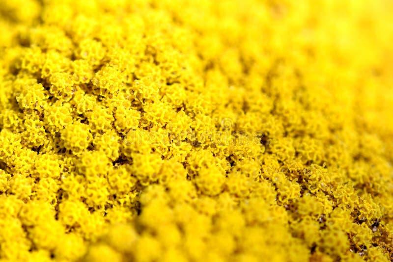 Close up de uma flor amarela imagens de stock royalty free