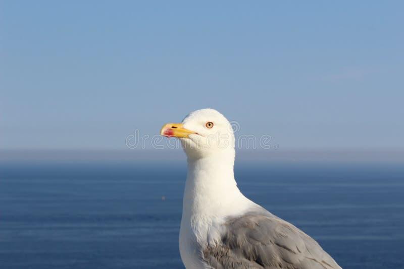 Close-up de uma gaivota imagens de stock