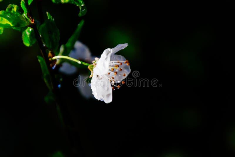 Close up de uma planta de florescência bonita nas madeiras imagem de stock