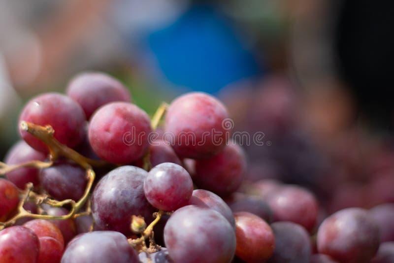 Close up de uvas frescas no fundo obscuro imagem de stock
