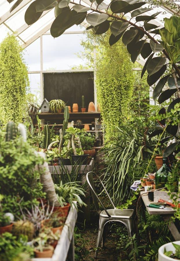 Close up de várias plantas na casa de vidro fotografia de stock royalty free