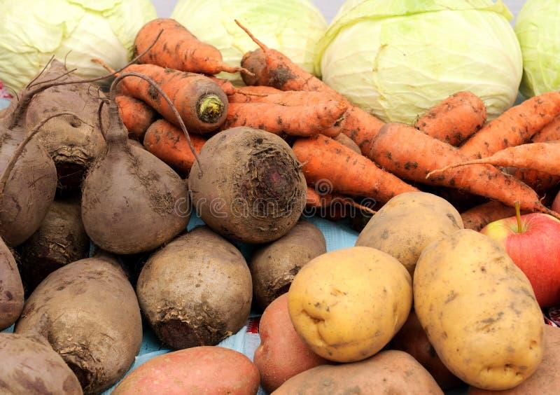 Close up de vegetais recentemente colhidos imagem de stock
