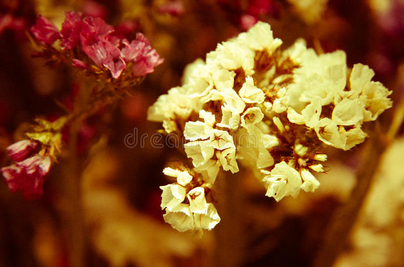 Close up of decorative and aromatic pot pourri. And dry flowers royalty free stock image