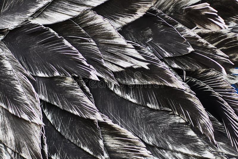 Close up. Decorative black bird royalty free stock photos