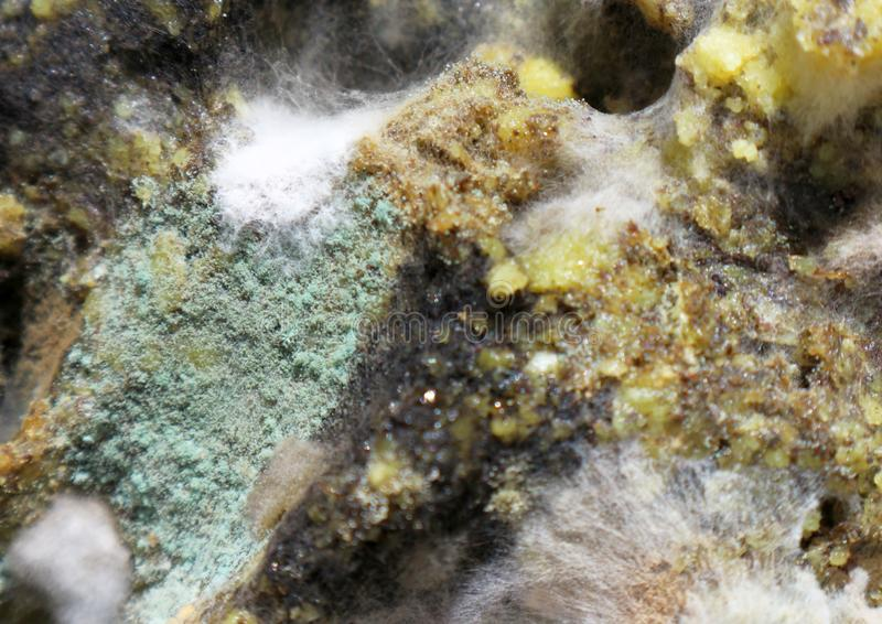 Close up defocused green and white mildew organism. Photo royalty free stock photography
