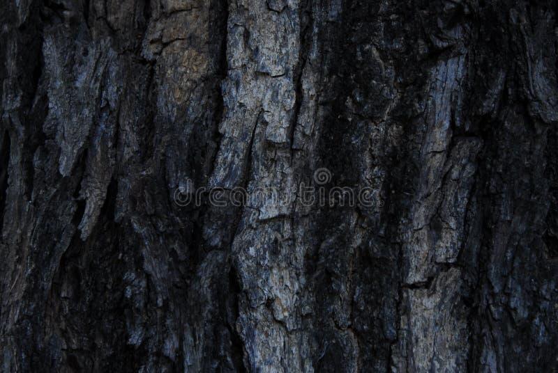 Bark wallwaper stock image