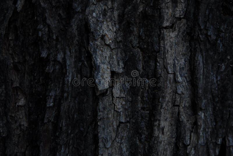 Bark wallwaper royalty free stock photo