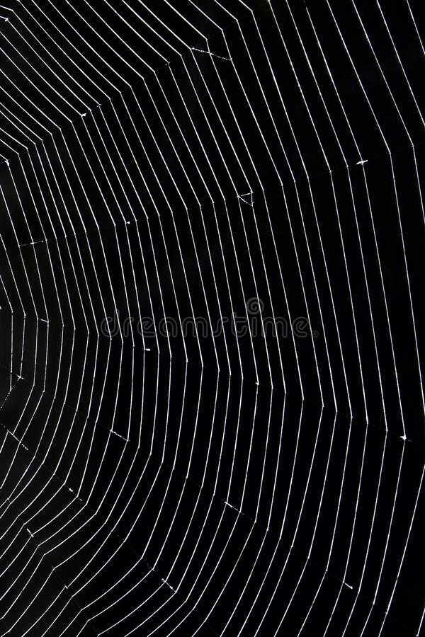 Spider Web close up. Close up detail of half of a spider`s web against black stock images