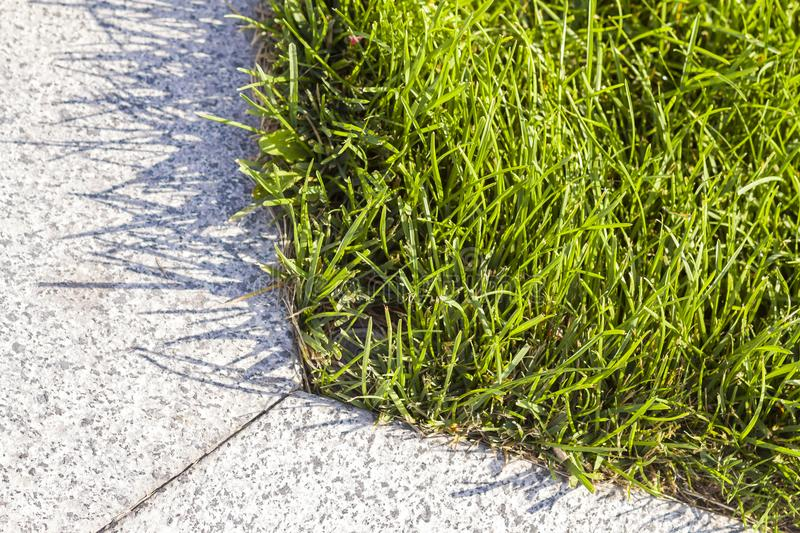 Close-up detailed image of fresh green bright grass on sunny summer day. Beautifully mowed lawn. Nice rest area. royalty free stock photos