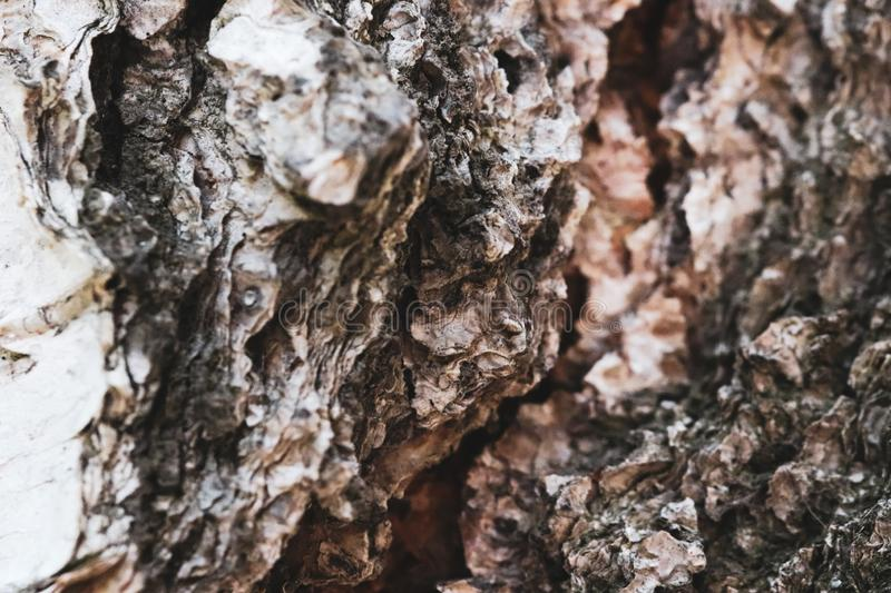 Close-up of a detailed tree bark wood texture. stock photos