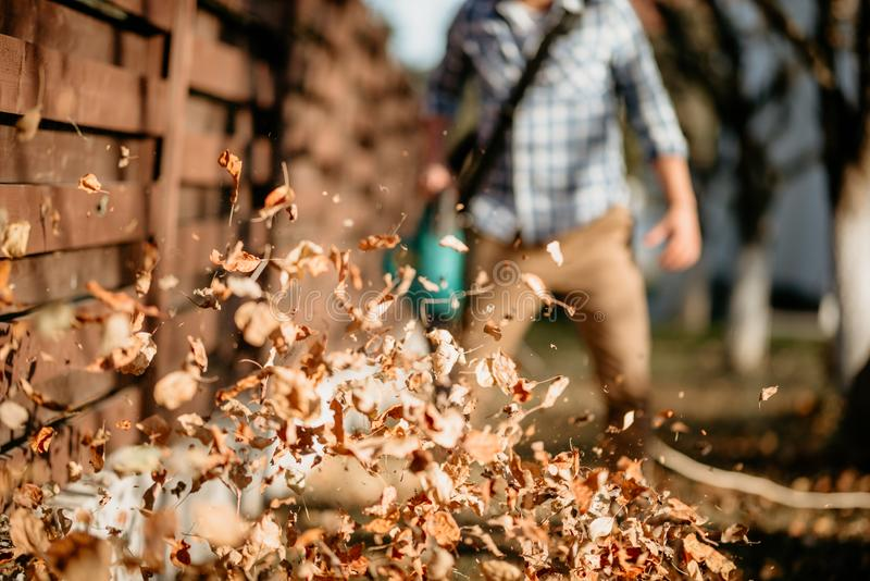 details of leaves swirling up when worker uses home leaf blower stock photo