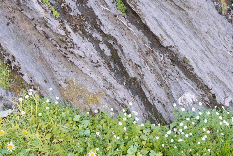 Close up of details of natural rock cut texture and green alpine stock images