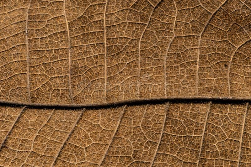 Close up detial of brown dry leaf texture background royalty free stock photo