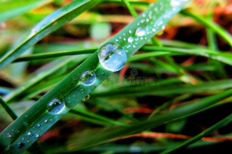 Close-up Of Dew Drops On Plant Free Public Domain Cc0 Image