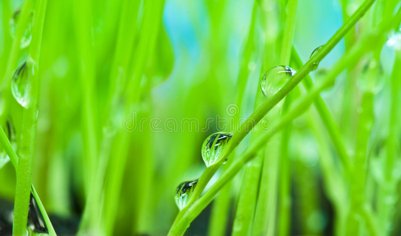 Close-up dew on green grass background. Close-up morning dew on green grass background royalty free stock image