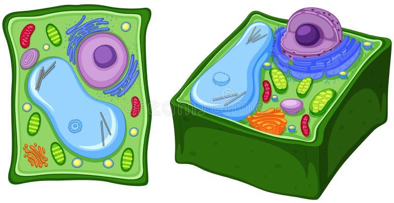 Close up diagram of plant cell. Illustration stock illustration