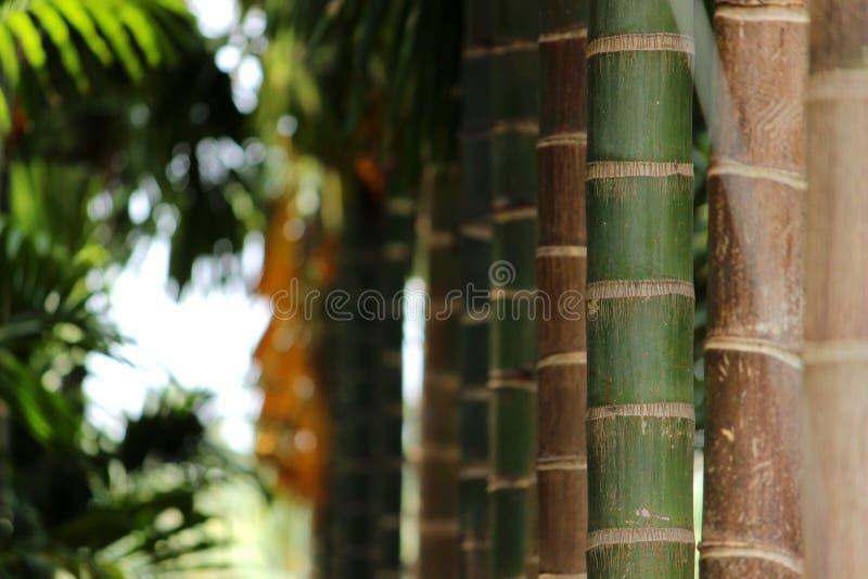 Close-up die van Arekanootboom wordt geschoten royalty-vrije stock foto