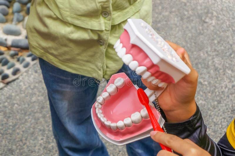 Close-up die van een vrouwelijke instructeur wordt geschoten die een tandenreplica standhouden stock foto
