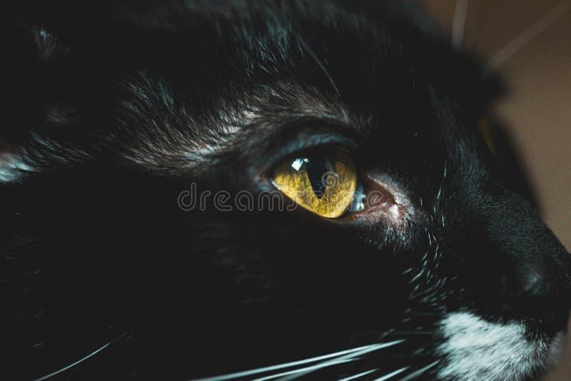 Close-up die van een zwarte bontkat met sparkly gele ogen wordt geschoten stock foto's