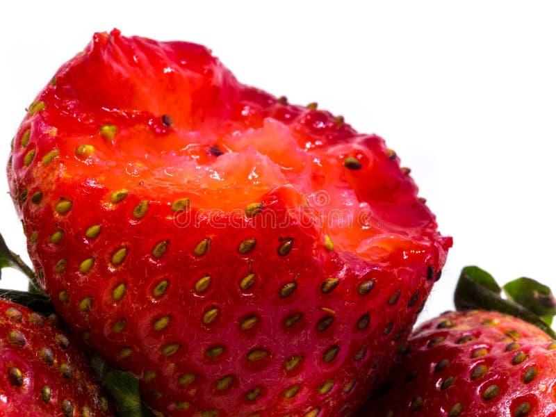 Close-up die van verse aardbeien is ontsproten Geïsoleerdj op witte achtergrond royalty-vrije stock afbeelding