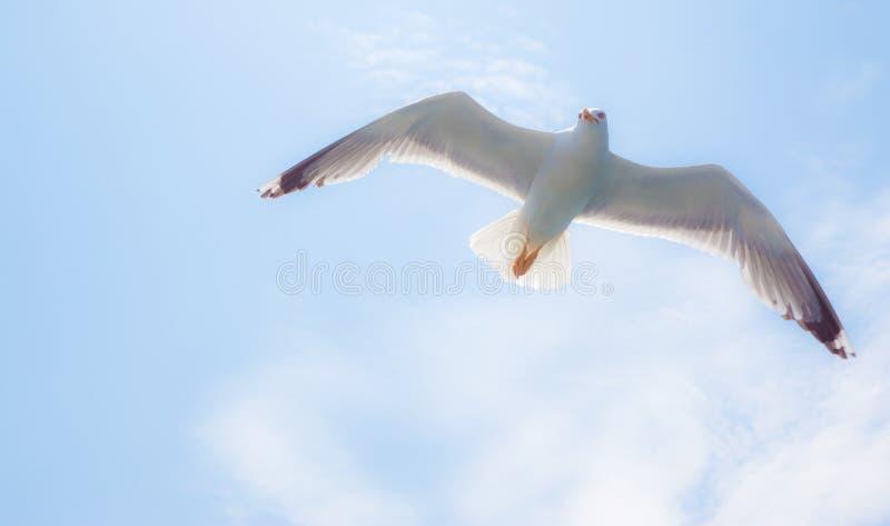 Close-up die van zeemeeuw, over blauwe hemel vliegt stock fotografie
