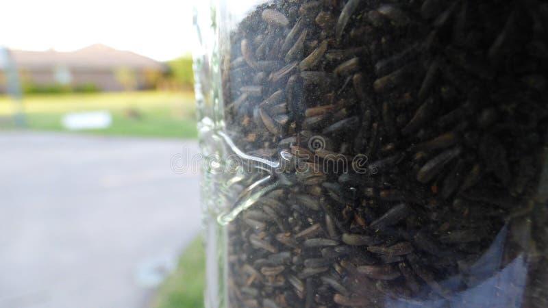 Close-up do alimentador do passarinho fotos de stock