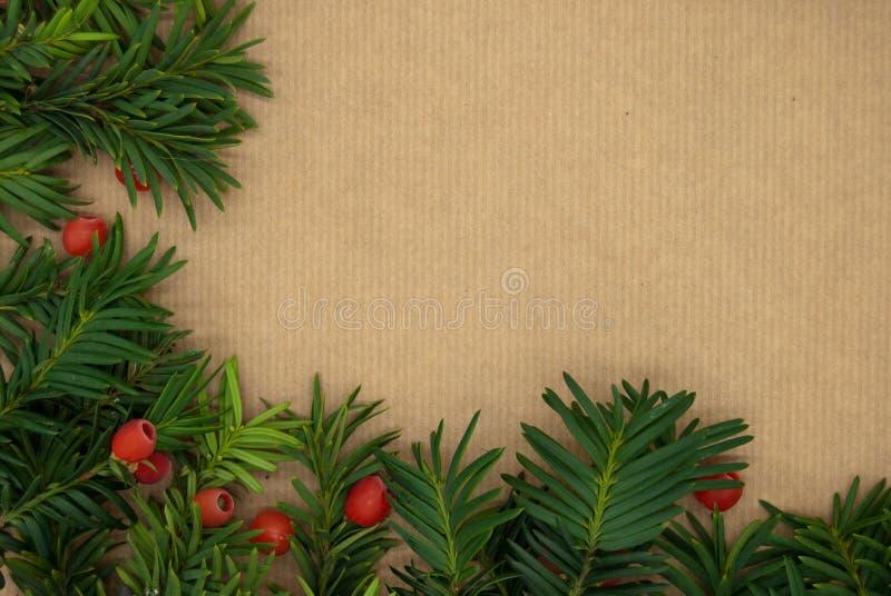 Close up do baccata do Taxus ou do teixo europeu com bagas maduras Fundo do Natal ano novo feliz 2007 imagem de stock royalty free