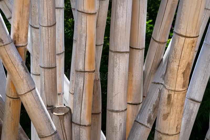 Close-up do bambu de madeira gigante imagens de stock