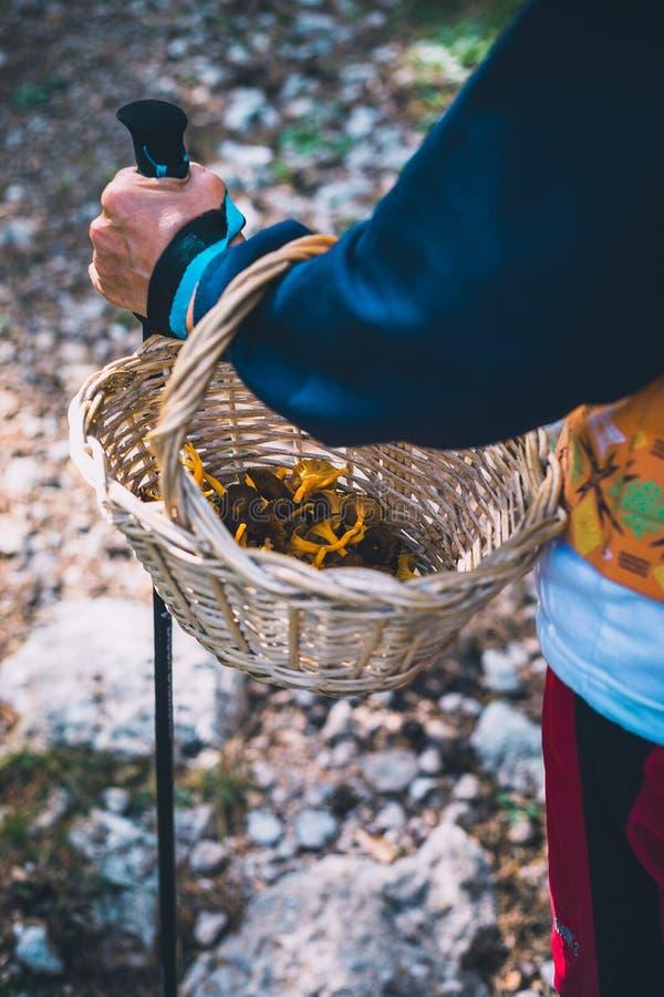 Close up do caçador dos cogumelos do caminhante da mulher que guarda uma cesta com cogumelos imagem de stock royalty free