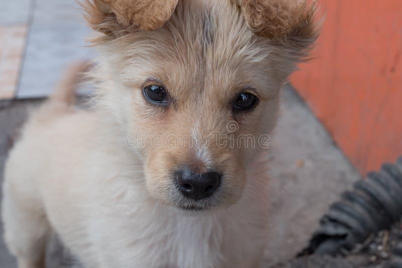 Close-up do cachorrinho misturado com fome desabrigado da raça na rua foto de stock