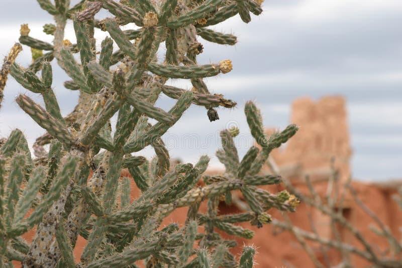Close up do cacto com missão no fundo, Abo Pueblo, New mexico fotos de stock royalty free