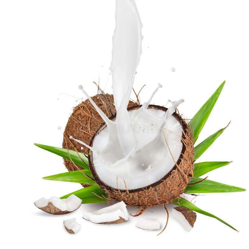 Close-up do cocos com respingo do leite no fundo branco foto de stock