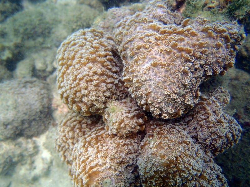 Close up do coral bonito imagem de stock royalty free