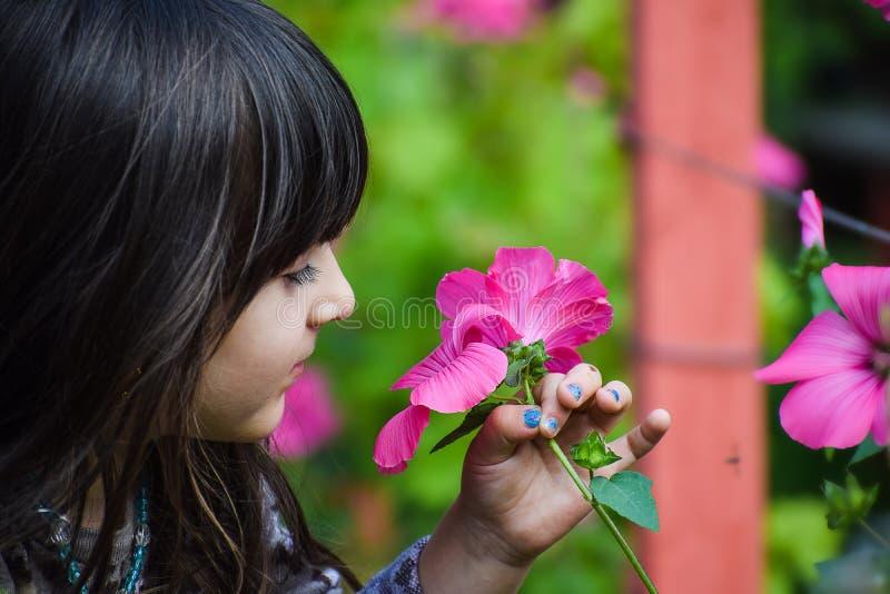 Close up do flowe guardando e de cheiro da criança da menina da criança consideravelmente pequena foto de stock royalty free