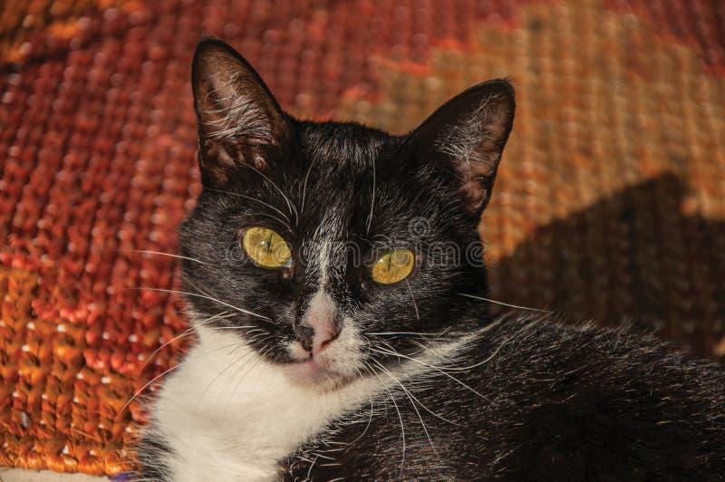 Close-up do focinho do ` s do gato no nascer do sol em Paraty imagens de stock royalty free