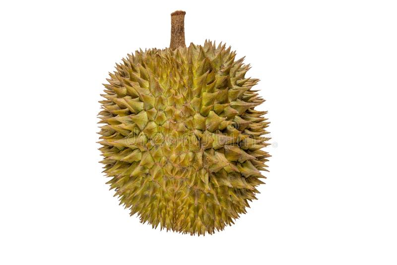 Close up do fruto do durian isolado no fundo branco imagens de stock