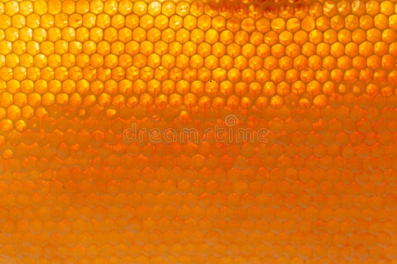 Close up do fundo das pilhas da abelha do mel imagens de stock royalty free