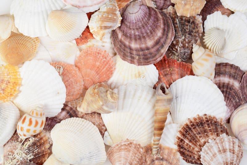 Close up do fundo sortido das conchas do mar imagens de stock royalty free
