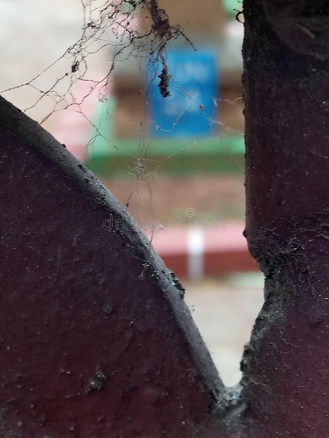 Close up do fungo imagens de stock royalty free