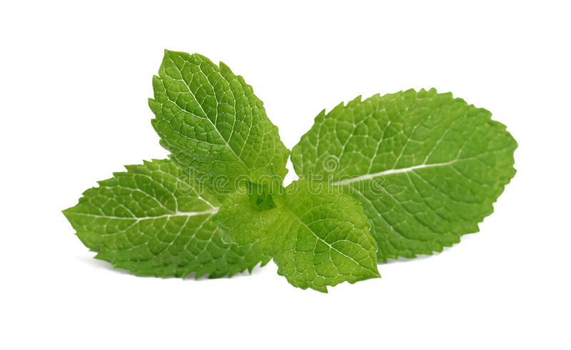 Close-up do galho perfumado fresco da hortelã isolado no fundo branco Hortelã verde-clara para cocktail e bebidas do verão foto de stock