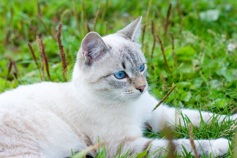 Close up do gato ao ar livre fotografia de stock royalty free