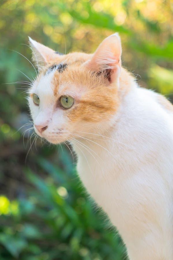 Close-up do gato no jardim Foco seletivo fotografia de stock