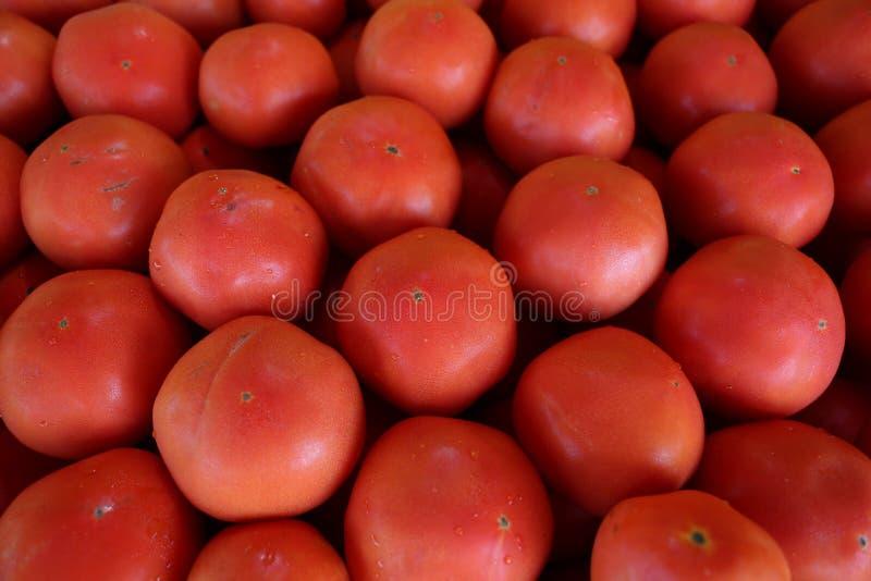Close up do grande tomate vermelho no fundo do escaninho fotos de stock