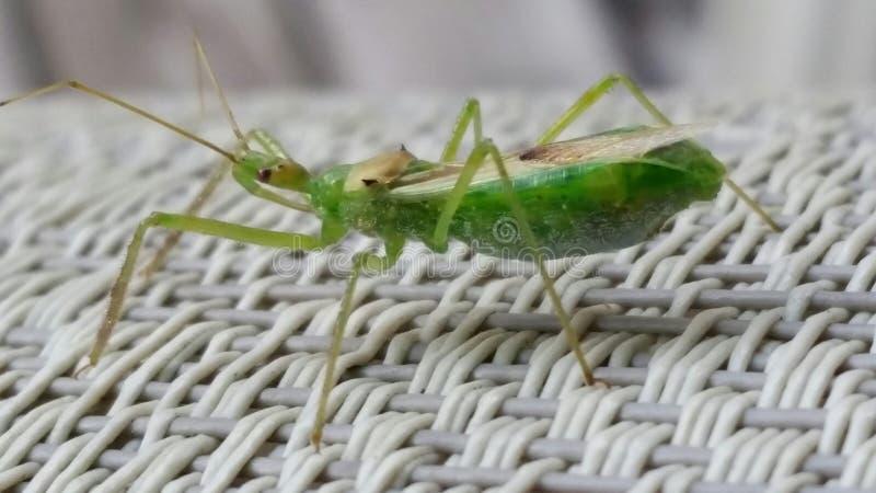 Close-up do inseto fotos de stock