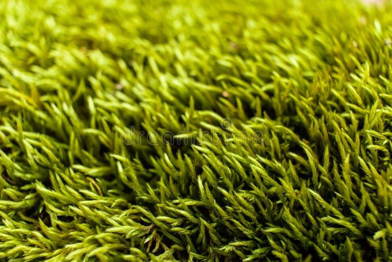 Close up do musgo macio verde imagem de stock royalty free