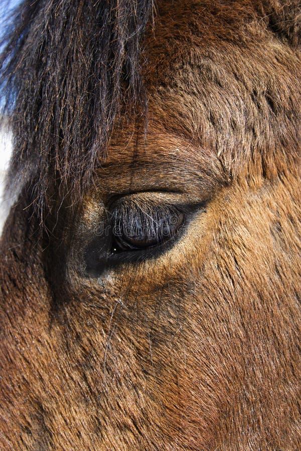 Close-up do olho do cavalo imagens de stock royalty free