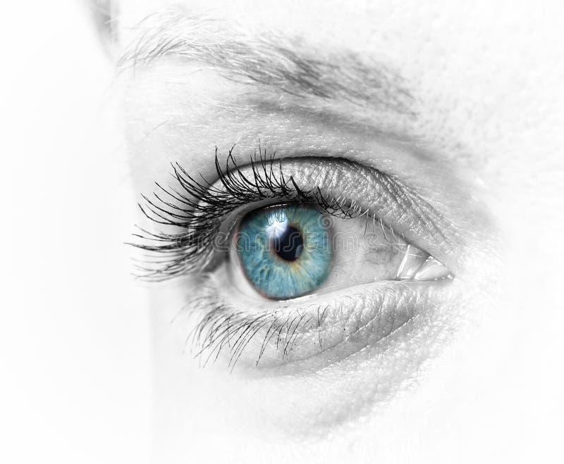 Close up do olho fêmea foto de stock royalty free