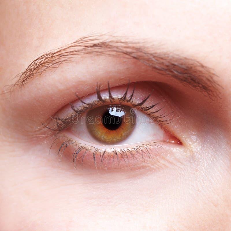 Close-up do olho humano fotografia de stock royalty free