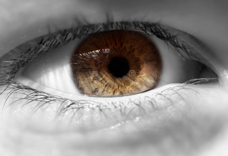 Close up do olho humano fotos de stock royalty free